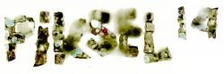 PIKSEL14_weblogo-green
